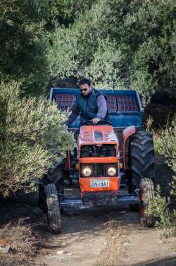 Taking my tractor to my Tramontana Olive Grove