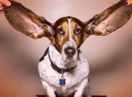 Hoe goed luister jij?