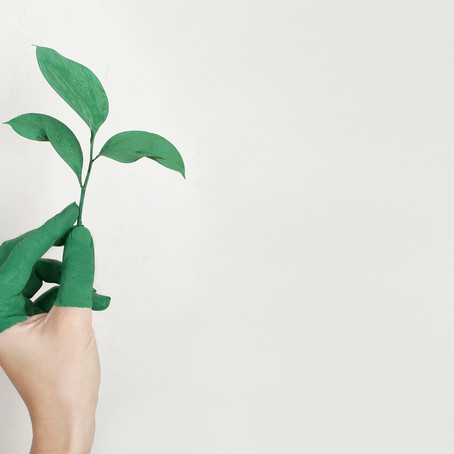 The Struggle Of Sustainability In The Landscaping Industry