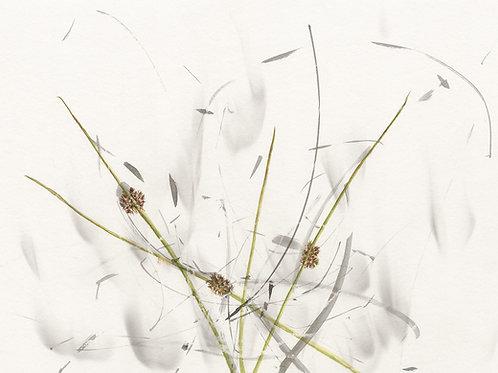 Wind Rushes              (Fine Art Print)