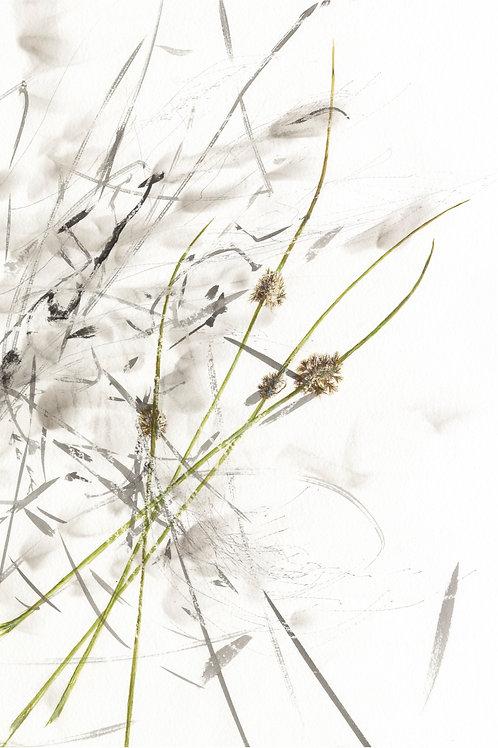 Breathing Rushes     (Fine Art Print)