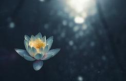 Lotus flower dark - zoltan tasi.jpg