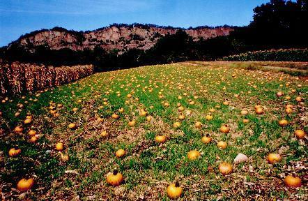 Dr. Davies Pumpkin Patch