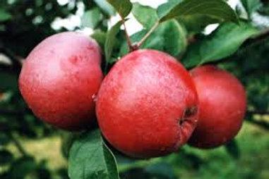 Our Own Mac Apples (2 Qt Basket)