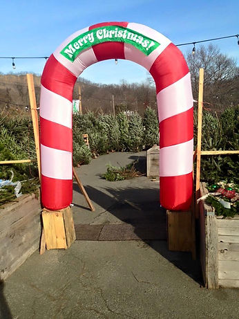 Merry Christmas entrance to our tree farm