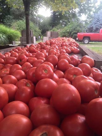 delicious ripe tomatoes