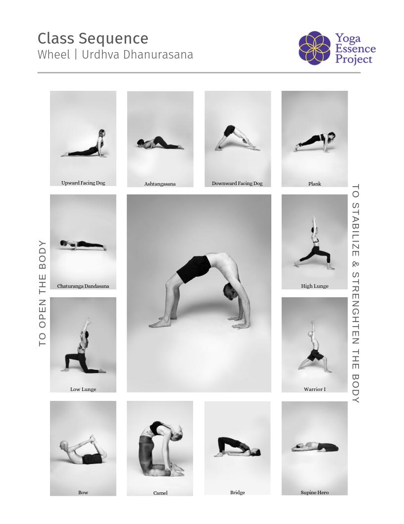 Yoga class sequence toward Dhanurasana