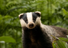 badger-trust-your-stories-5.png