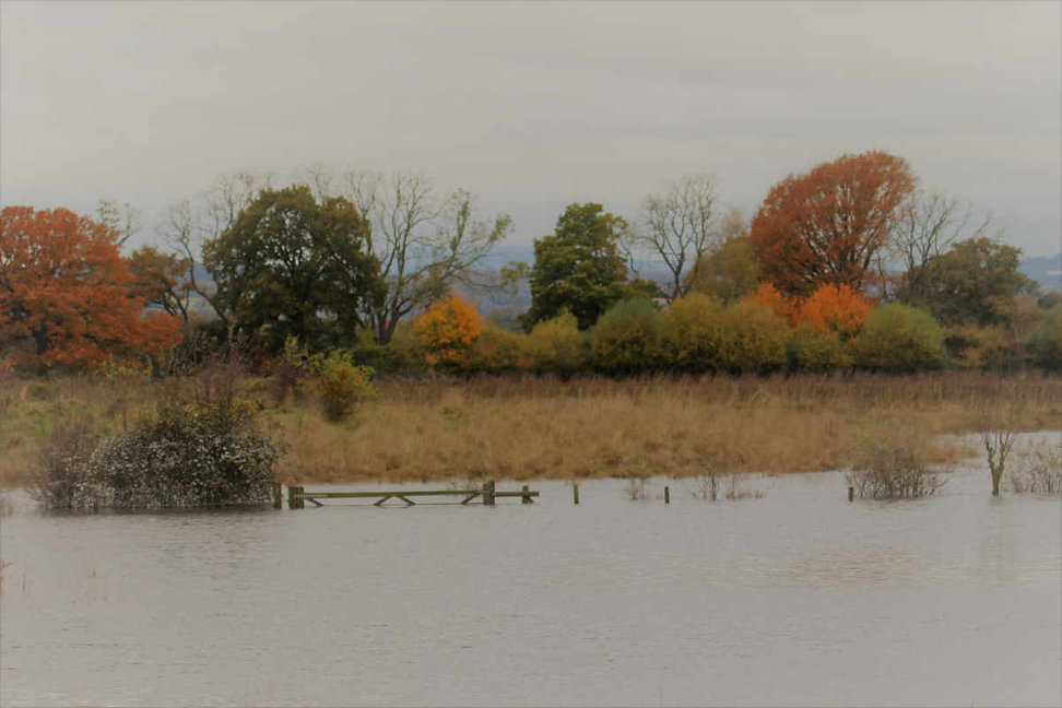Flooded land in November 2019 after the heaviest recorded autumn rainfall ©Tris Pearce