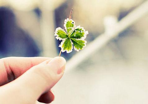 Terapia do Luto - Flor de Cerejeira Instituto de Psicologia