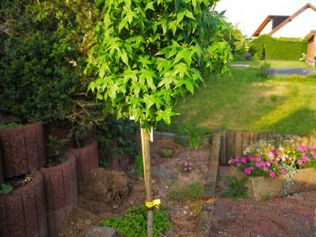 Rede / Speech:  Ein Amberbaum für Werner Dieckmann    An Amber tree for Werner Dieckman