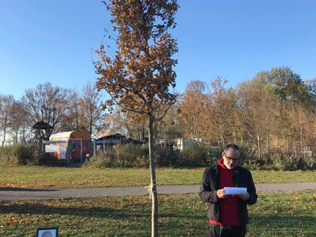 Brunos Baum in Wesseling