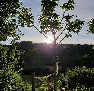 Erinnerungsbaum-gepflanzt-im-Main-Tauber-Kreis-Foto-Verein-234338.jpg