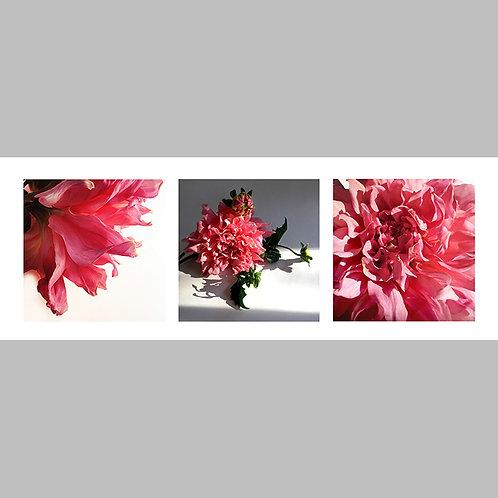 Triptycha SPECIAL Edtion -  06 JFSP Late Dahlia
