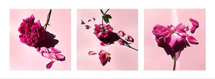 26 JF Garden Roses