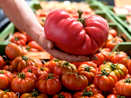 JF Tomatoes 02