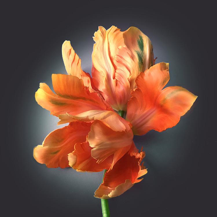 JF Tulip 36