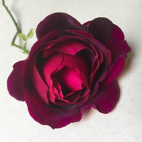 JF Rose 52