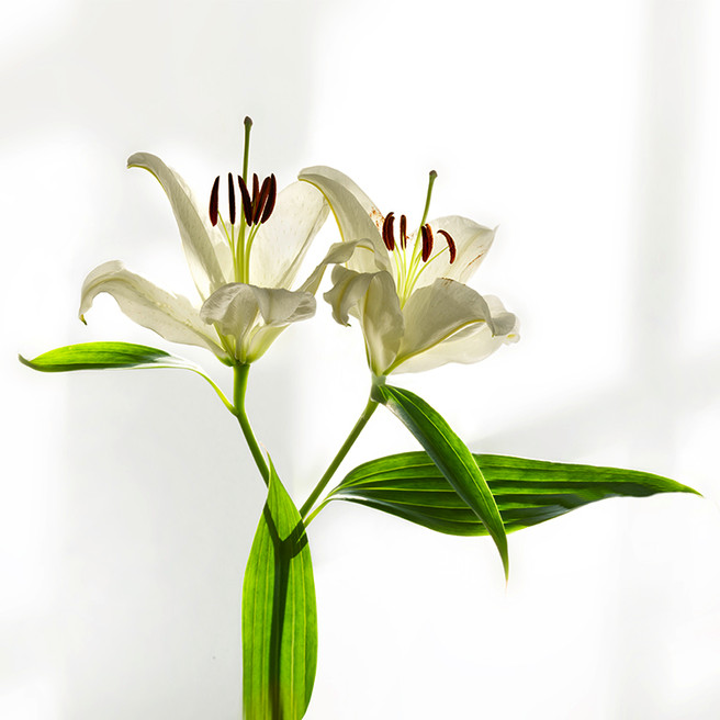 JF Lilly 09