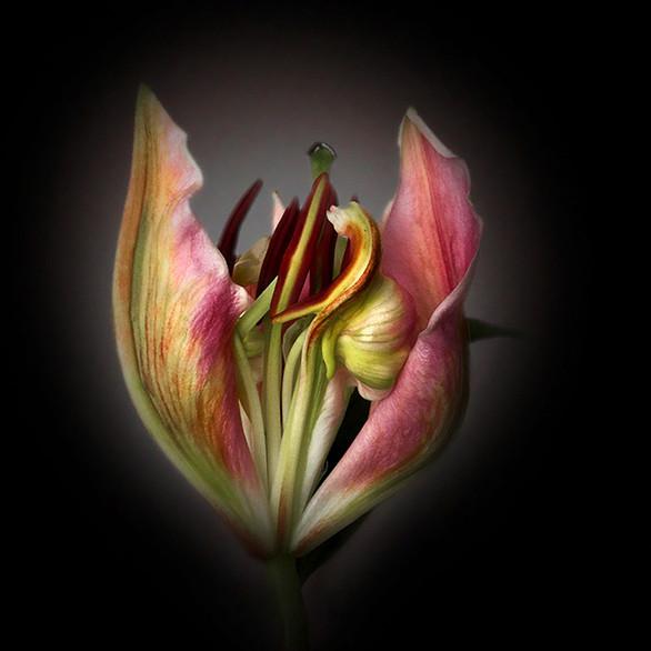 JF FlowerART Lily 11