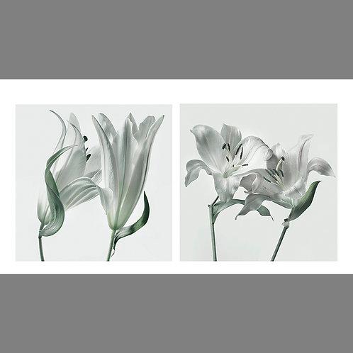 Vintage Print Lilies 02