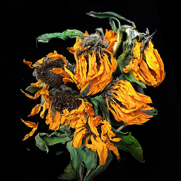 JF FlowerART Late Sunflowers 15