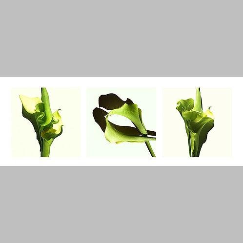 Triptycha SPECIAL Edtion - 10 JFSP green Callas