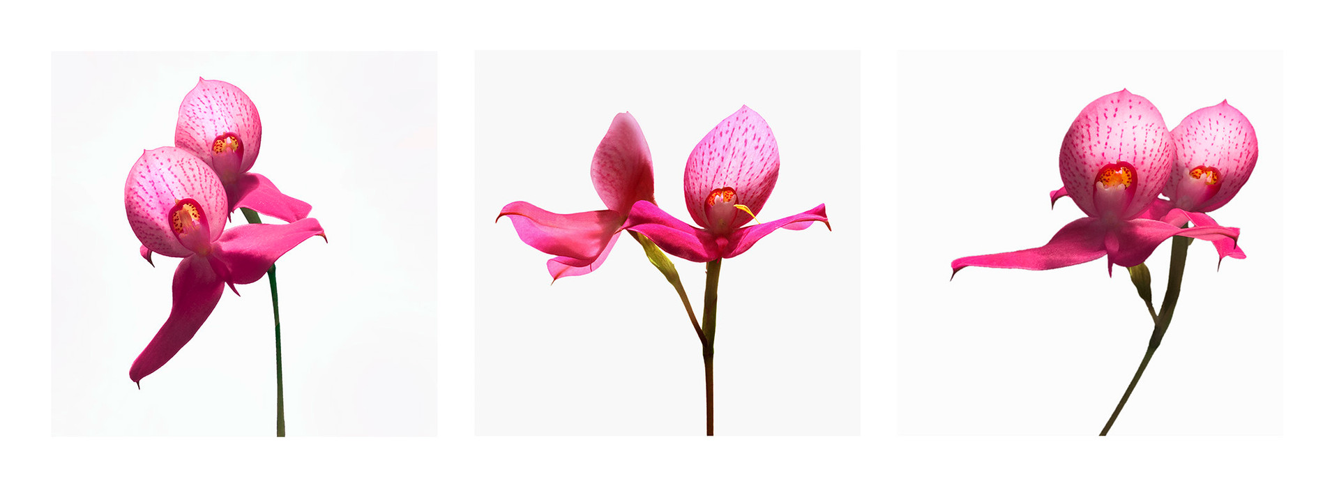 JF Triptichon 12 Orchid