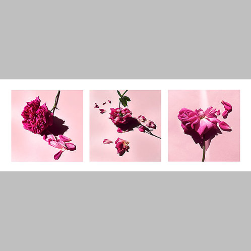 Triptycha SPECIAL Edtion - 26 JFSP Garden Roses