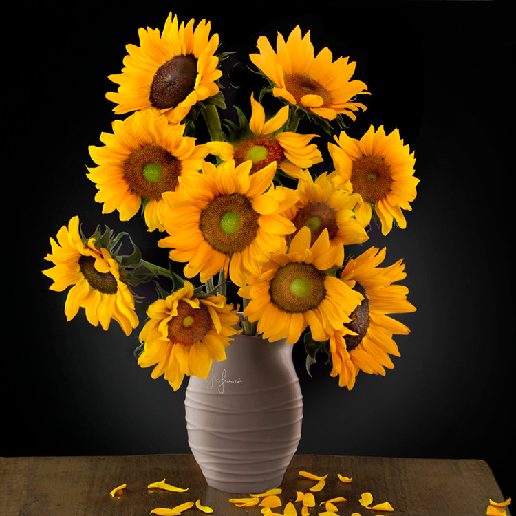 JF FlowerART Sunflowers 14
