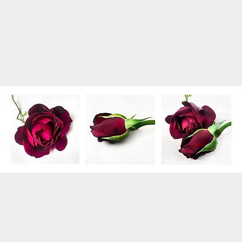 JF Triptichon 02 Bacara Rose