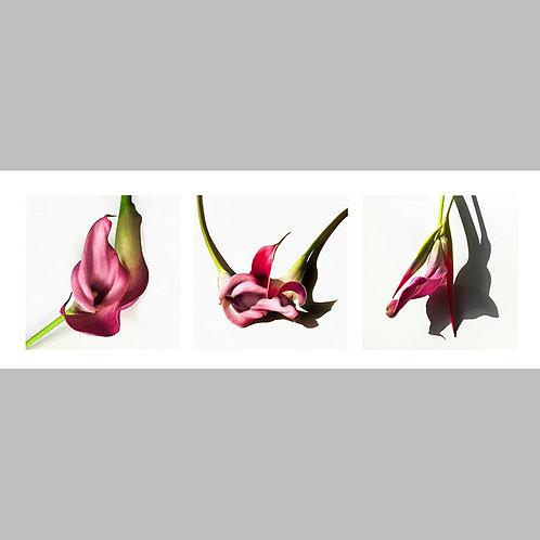 Triptycha SPECIAL Edtion - 22 JFSP Callas