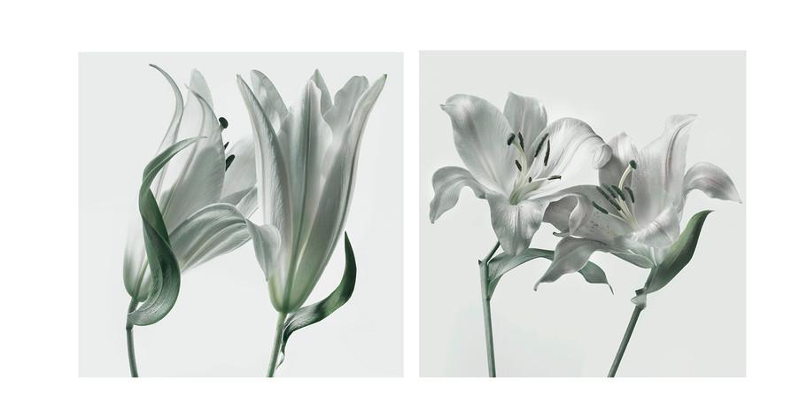 Vintage Print Lilies