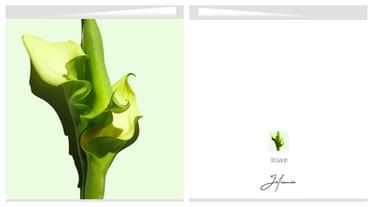 Card Calla 07 shop.jpg