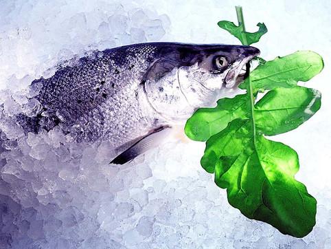 JF Fish 01