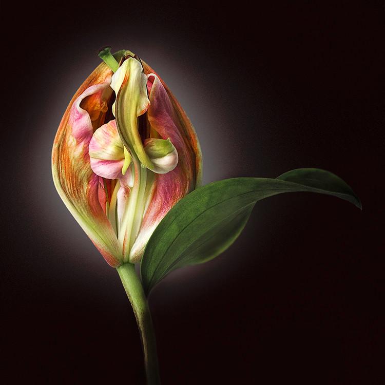 JF FlowerART Lily 10