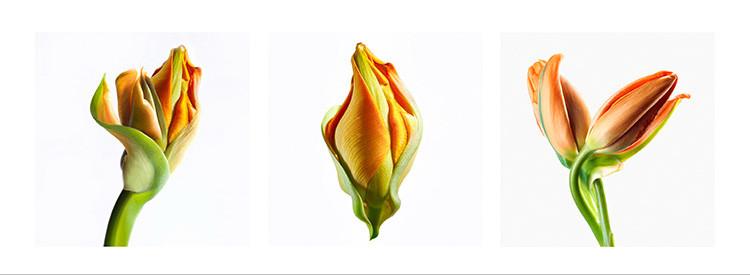 24 JF Tulip orange