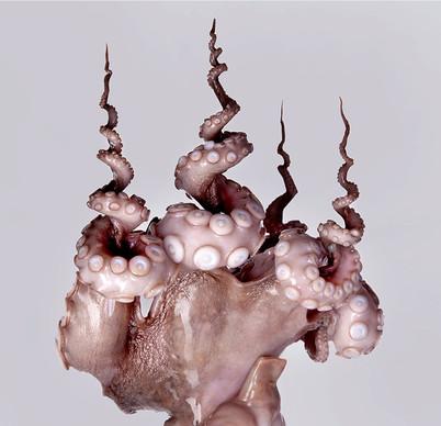 JF Octopus 01