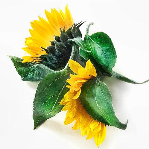 JF Sunflower 01