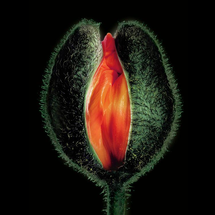 JF FlowerART Poppy 34