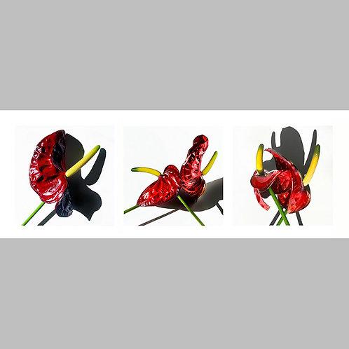 Triptycha SPECIAL Edtion -  02 JFSP Anthuria