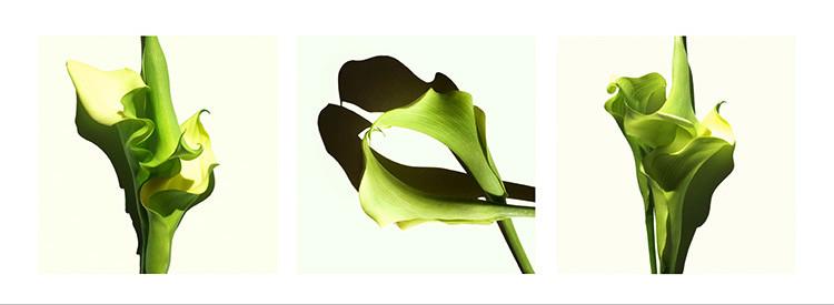 10 JF green Callas