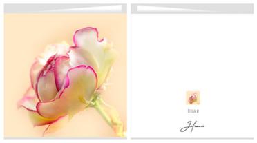 Card Rose 44 shop.jpg