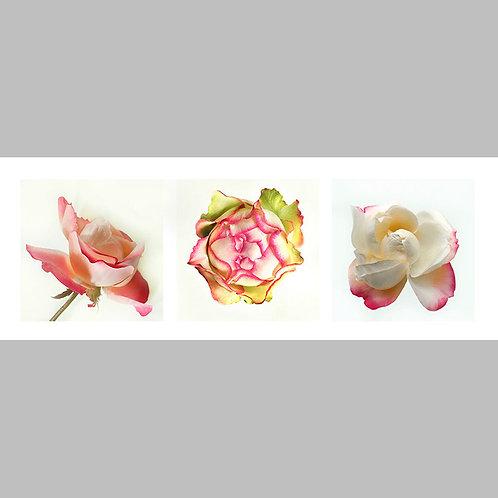 Triptycha SPECIAL Edtion - 09 JFSP Rose Alfed Duerer