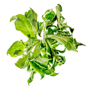 JF Glacial Salad 01