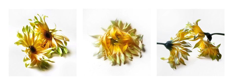 JF Triptichon 07 Dahlia yellow