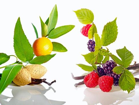 JF Fruits 02