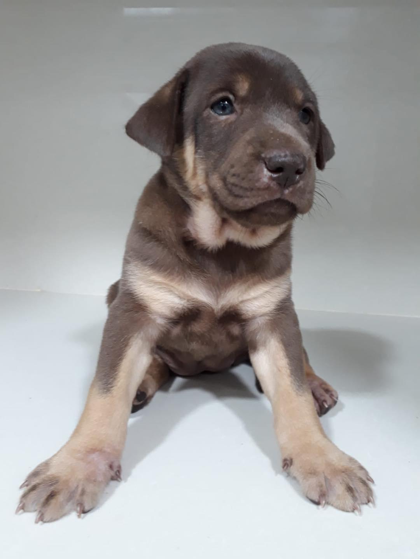 4 puppies-19 Feb 2021-2
