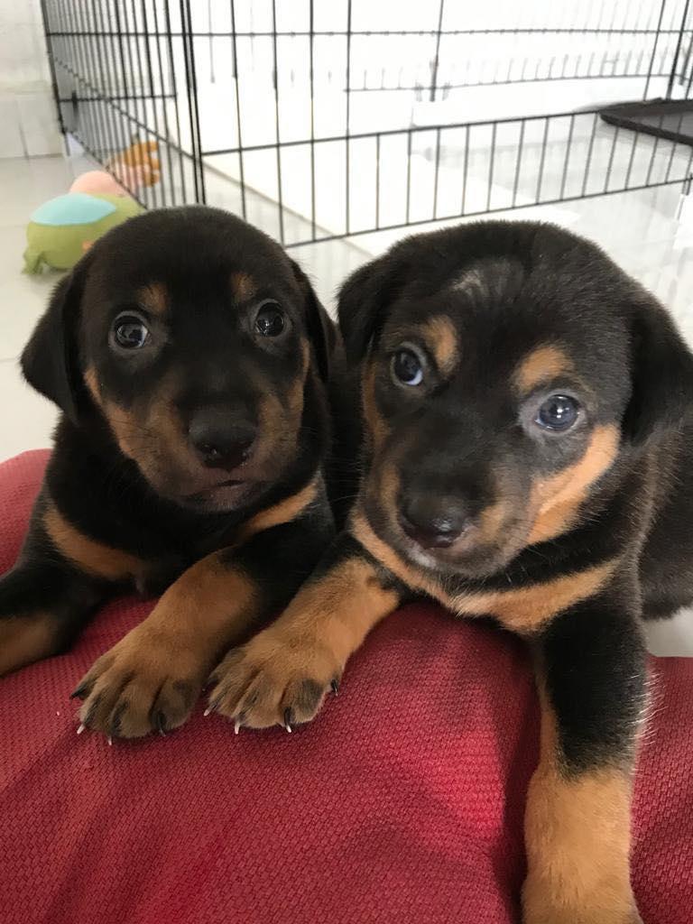 Puppy 1 & 2