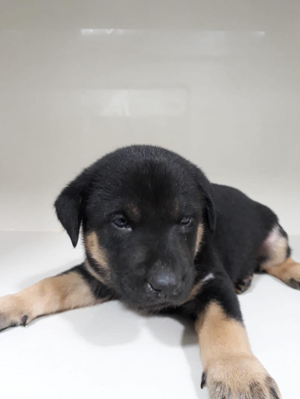 4 puppies-19 Feb 2021-4